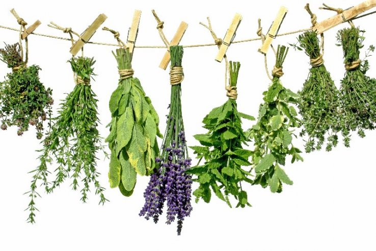 Ime: Herbs.jpg Pregleda: 862 Veličina: 95.1 KB