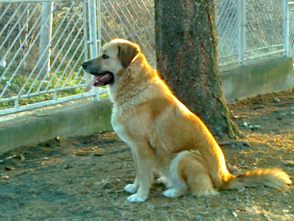 Ime: maki pas.jpg Pregleda: 1160 Veličina: 162.4 KB