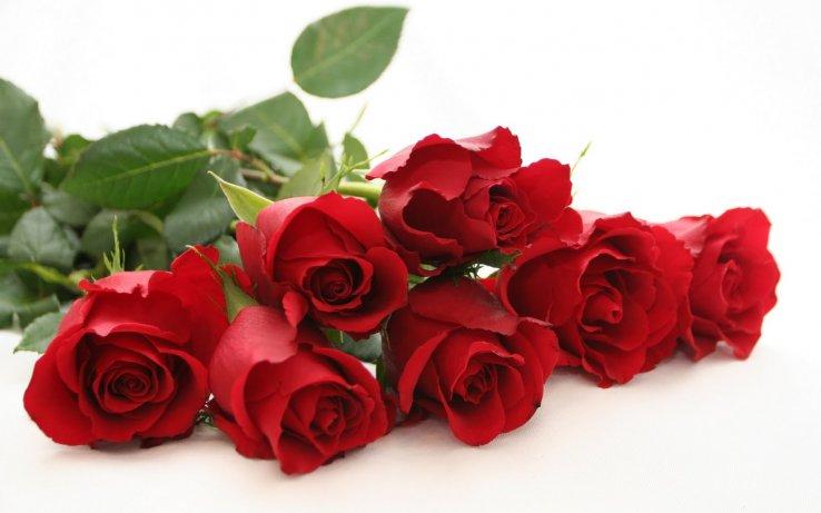 Ime: red-roses-beautiful-red-rose-wide-hd-new-wallpaper-red-rose-free-beautiful-desktop-image.jpg Pregleda: 62 Veličina: 42.4 KB