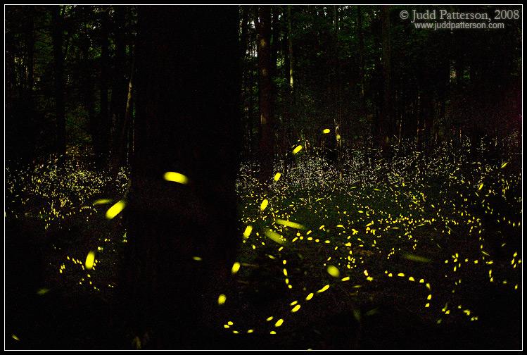 Ime: elkmont_fireflies_2008.jpg Pregleda: 1675 Veličina: 181.1 KB