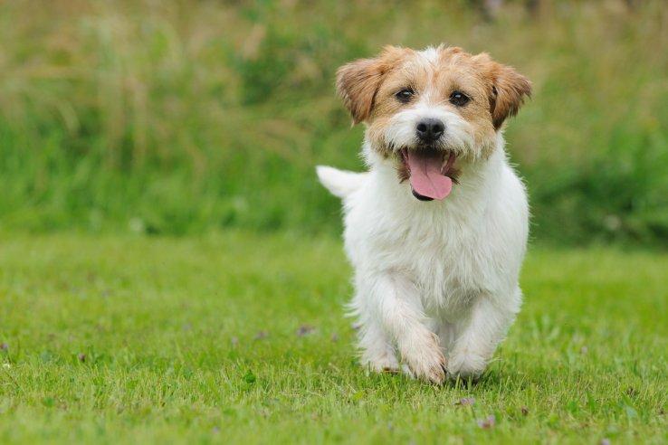 Ime: dogs1.jpg Pregleda: 87 Veličina: 54.5 KB