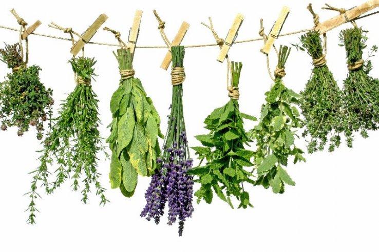 Ime: Herbs.jpg Pregleda: 681 Veličina: 95.1 KB