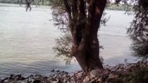 Vrba sa obale Dunava by Sremičica